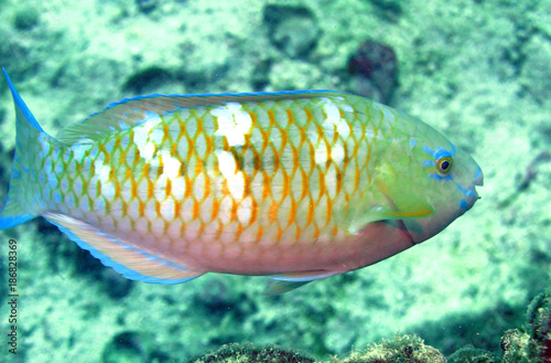 Foto op Canvas Groene koraal 海中写真