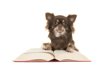 Cute chihuahua dog lying on a red book