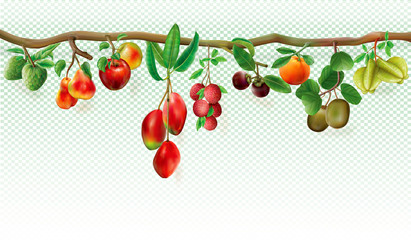 Branch with tropicals fruits