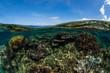 corail, océan , photo sous marine
