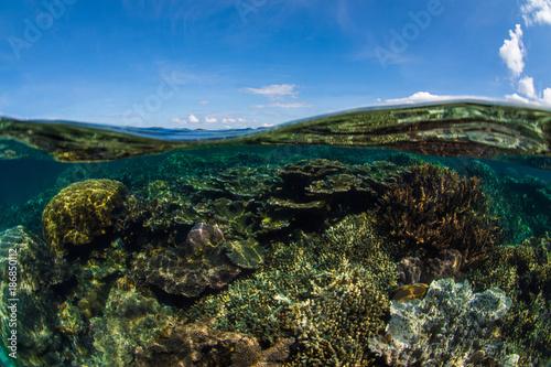 corail, océan , photo sous marine - 186850112