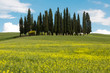 Wildflowers and cypress trees in Tuscany