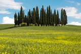 Wildflowers and cypress trees in Tuscany - 186853177