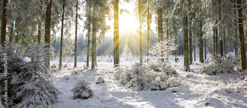 Sunset in winter forest.
