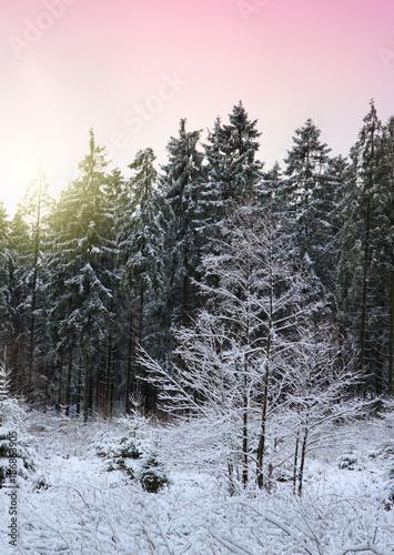 Foto op Aluminium Lichtroze Winter sunshine through trees.