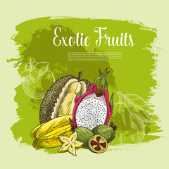 Vector poster of exotic fruits durian or carambola