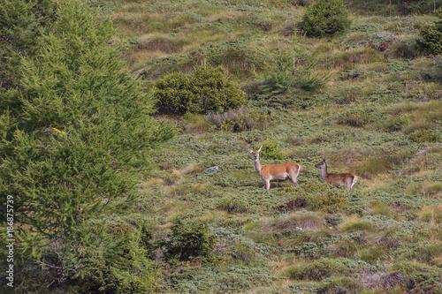 Aluminium Hert Deers mother and son