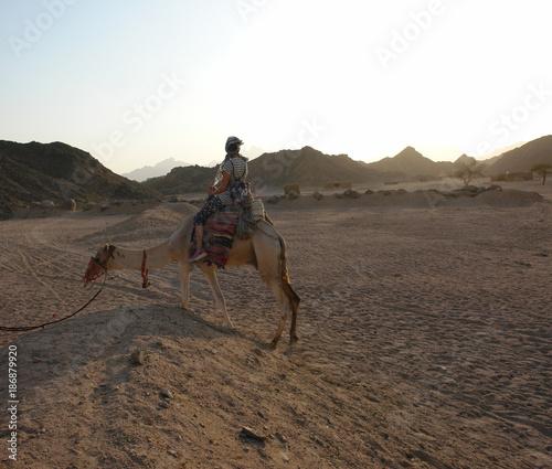 Fotobehang Kameel Kamelreiten in der Wüste (Ägypten)