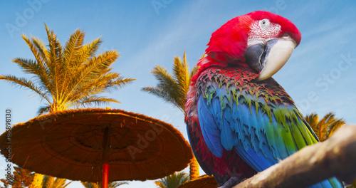 Aluminium Papegaai parrot and sky