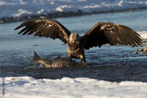 Plexiglas Eagle the continuing struggle