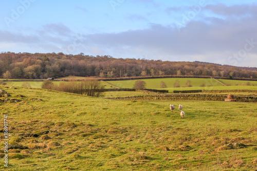 Foto op Plexiglas Honing Lake District Landscape