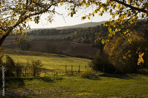 Foto op Canvas Natuur autumn