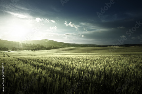 Staande foto Pistache Green field of wheat in Tuscany, Italy