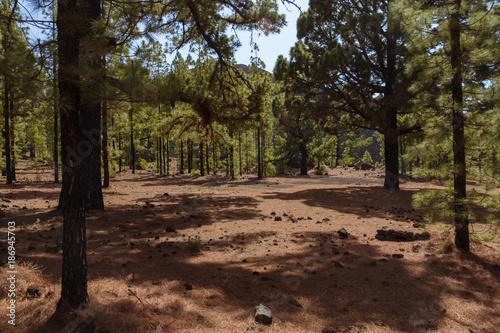 Fotobehang Zalm Dark volcanic desert landscape with green trees