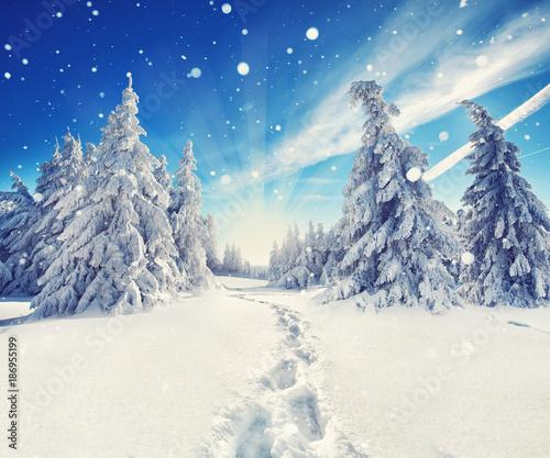 Road in forest Abenteuer im Winterwald