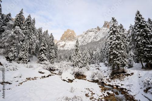paesaggio invernale in Val Canali, nel parco naturale di Paneveggio - Trentino