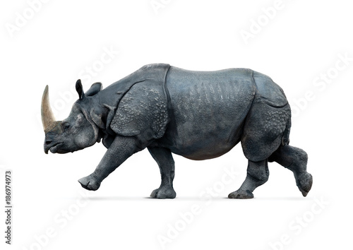 Fotobehang Neushoorn rhino isolated on white