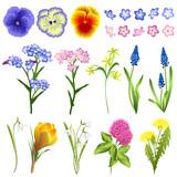 Set of spring flowers (viola, forget-me-not, star of Bethlehem, muscari, snowdrop, crocus, clover, dandelion). Hand drawn vector illustrations on white background.