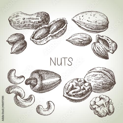 Hand drawn sketch nuts set. Vector illustration of eco food