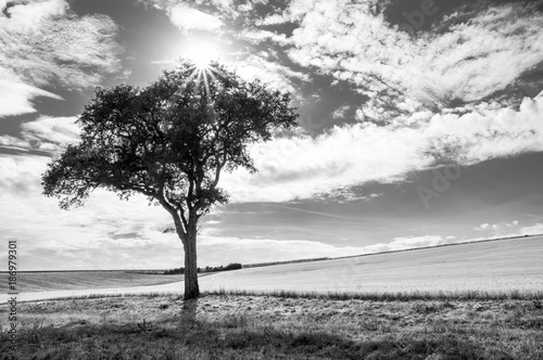 Black and White tree with the sun
