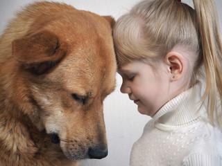 huge dog and little girl. Emotional portrait