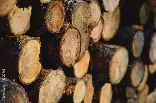 Foto op Aluminium Brandhout textuur The wood