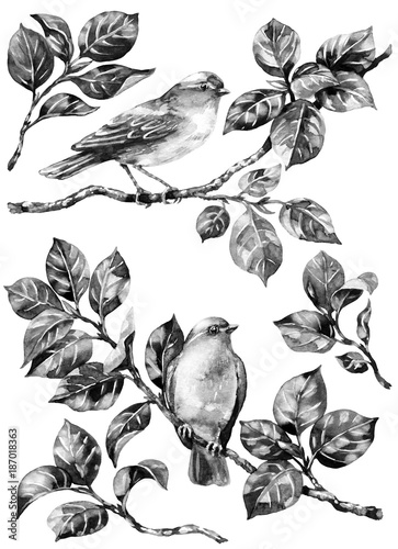 Songbird on Branches  Monochrome - 187018363