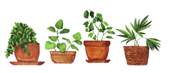 Set of doodle home plants painted by watercolor. Hand drawn illustration. © angry_red_cat