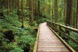 Wooden pathway through green pine forest