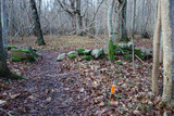 Marked footpath in a forest - 187024952