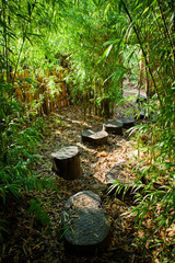 Bamboo forest with wooden steps path.