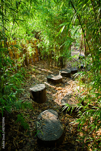 Aluminium Bamboe Bamboo forest with wooden steps path.