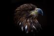 Sea Eagle - Pygargue à queue blanche