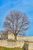 Bare Tree in Fort - 187057320