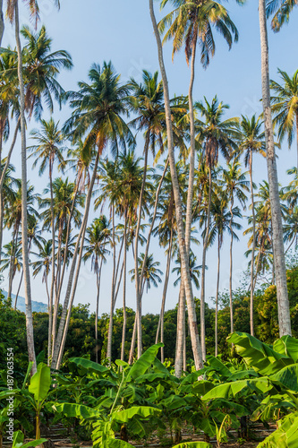 Keuken foto achterwand Natuur Palms and banana plants on Ometepe island, Nicaragua
