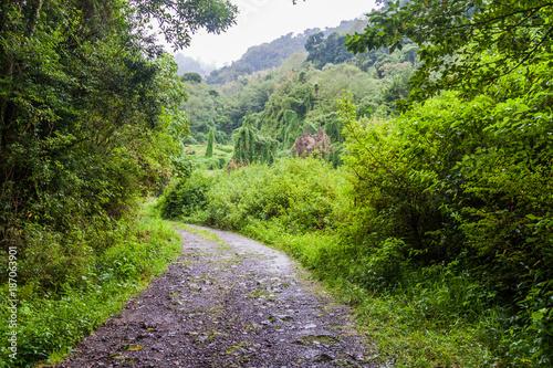 Fridge magnet Road near Bajo Grande village near Baru volcano, Panama
