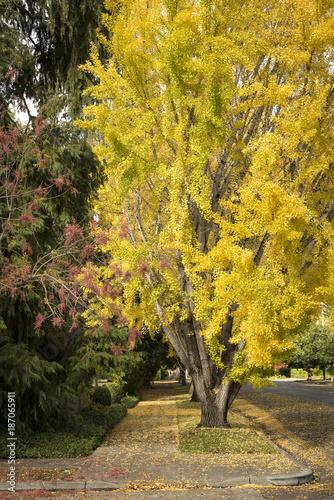 Fotobehang Herfst Autumn trees with sidewalk