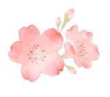 桜 花 - 187067334