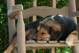 Sleeping Dog in Rocking Chair - 187075971