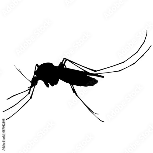 Mosquito Silhouette Vector Graphics - 187082309