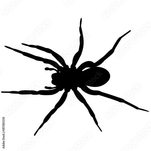 Fototapeta Spider Silhouette Vector Graphics