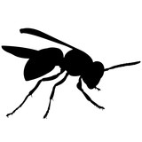 Wasp Silhouette Vector Graphics - 187083916