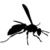 Wasp Silhouette Vector Graphics - 187083931