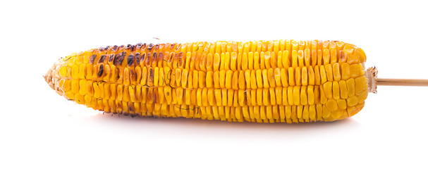 Appetizer grilled corn in white background © sucharat