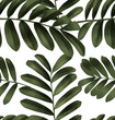 leaf pattern background2 - 187088511