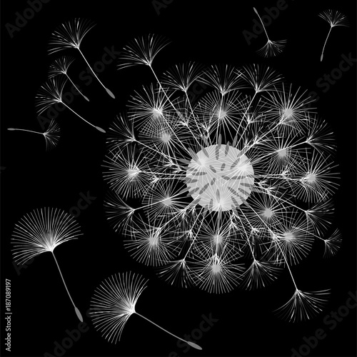 Abstract background of a dandelion for design. © Nina