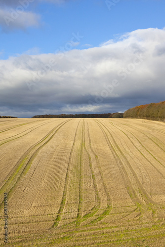 field patterns and woodland - 187095551