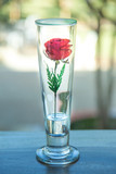Red Rose in glass - 187096550