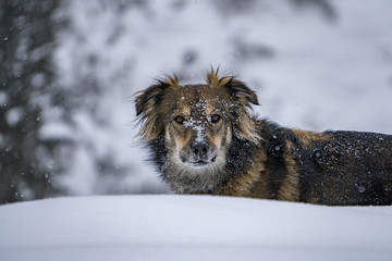 Dog portrait in the snow background