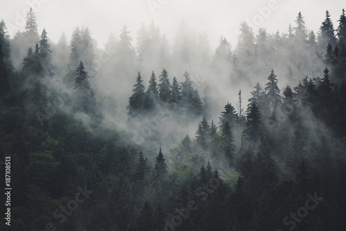 Misty landscape with fir forest in hipster vintage retro style - 187108513
